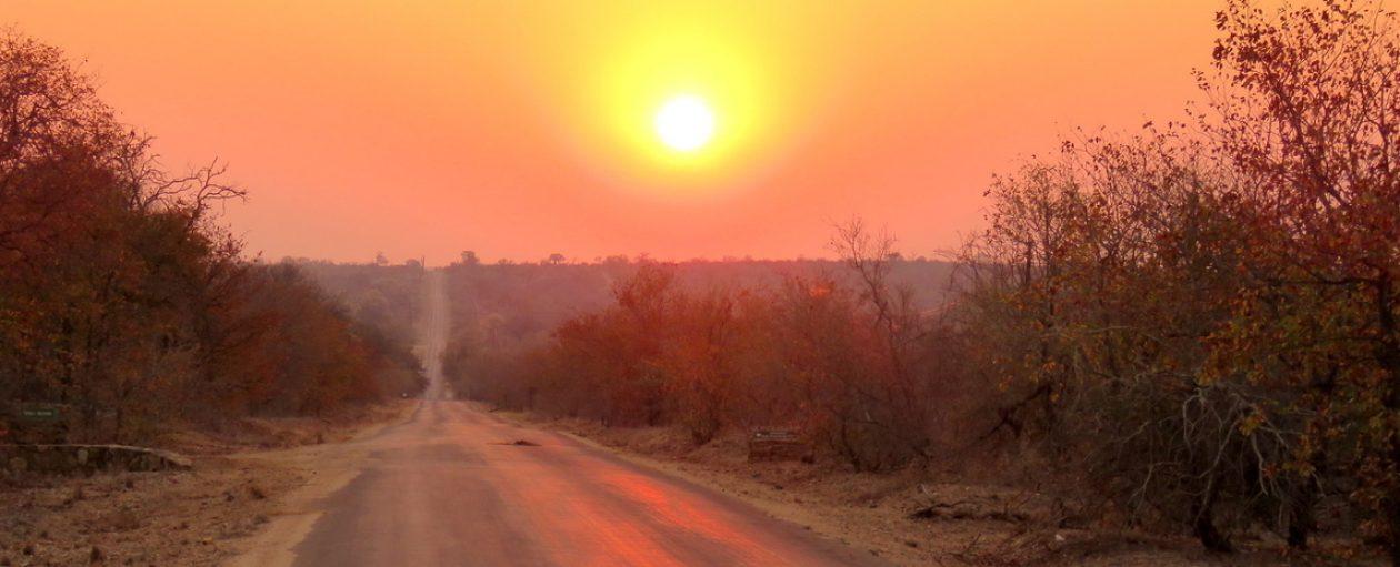 Mopane Grove